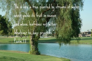 BiblicalWealth-Psalm-1-3